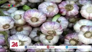 Cảnh báo tình trạng trà trộn tỏi Lý Sơn | VTV24
