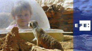 En este zoológico están los animales que menciona la Biblia.