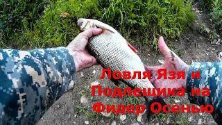 Ловля Язя и Подлещика на Фидер Осенью Видео Рыбалка