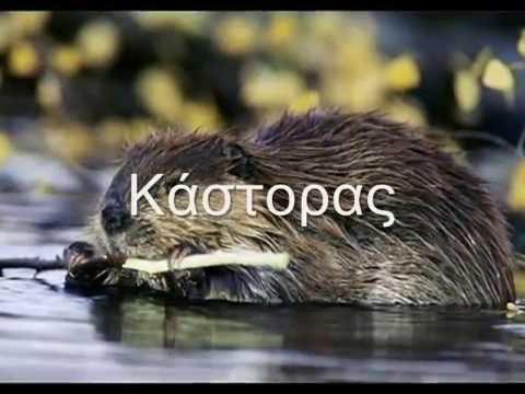 Πανίδα της Ελλάδας