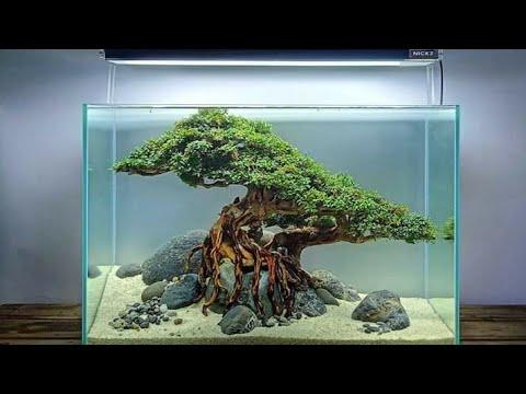Aquascape Tema Akar Dan Batu - AKARKUA