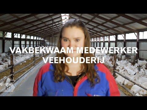 Praktijkleren: Vakbekwaam medewerker veehouderij