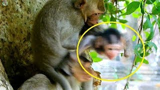 Back 1 day before injury ! Newborn Janet cry call mom Jane got sister catch not release |