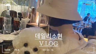 [VLOG] 비숑이랑 놀기 |헬렌카민스키 모자 관리 꿀…