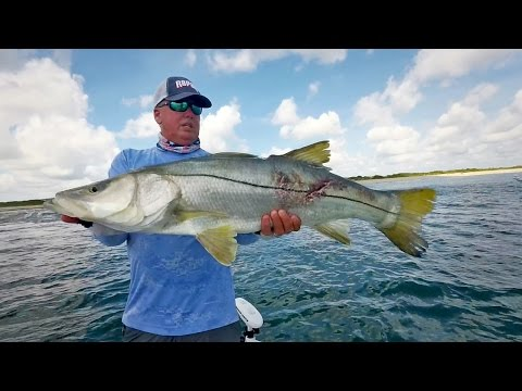 Monster Inlet Snook