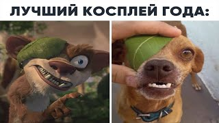 Подборка самых смешных роликов с собаками Compilation of funniest videos with dogs