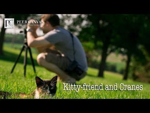 Kitty Friend Engagement Shoot by Peer Canvas Rockford Wedding Photographer