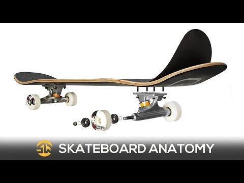 Skate Basics: The Anatomy of a Skateboard