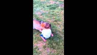 Rottweiler Attacks Baby Mason