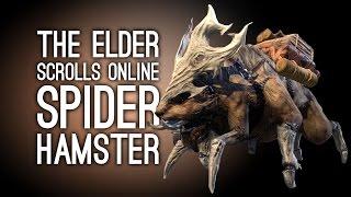 Let's Play Elder Scrolls Online: Orsinium DLC - SPIDER HAMSTERS!?