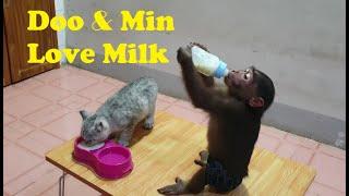 Monkey Doo And Cat Min Love Milk