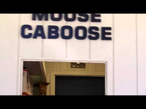 Moose on the Loose from