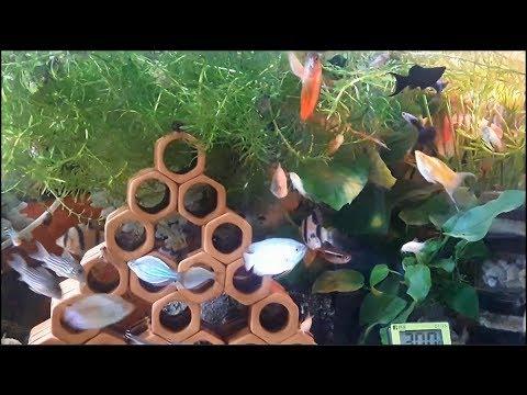 Ngắm bể cá cảnh trước khi ngủ (VietSub)
