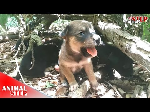 Puppies Rescued from Trash Pile – They Need a Warm Home!
