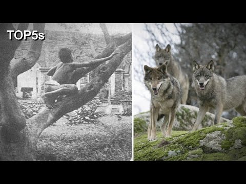 Thumbnail: 5 Incredible Stories of Feral Children Being Raised by Animals