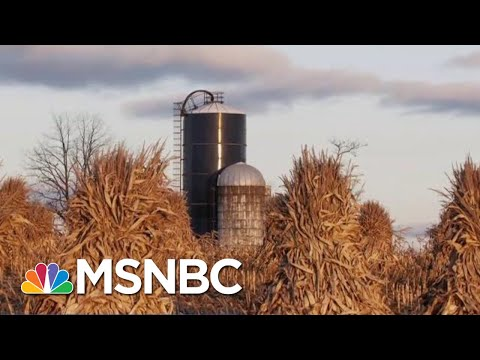 New Ethanol Rules Are Testing Farmers' Support Of President Donald Trump   Velshi & Ruhle   MSNBC