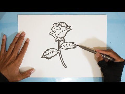 Cara Menggambar Bunga Mawar Untuk Pemula Step By Step Youtube