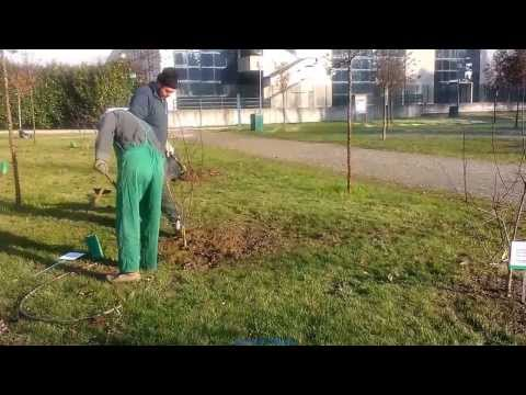 Piantumazione Giardino della Vita - Idroscalo Segrate 05/12/2013