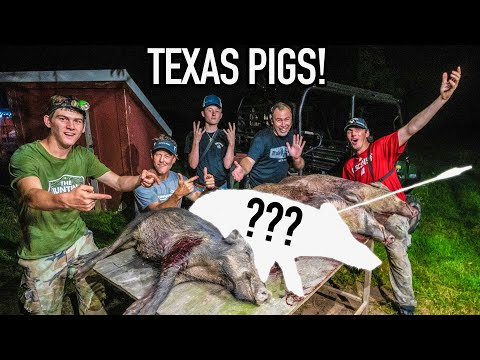 4 PIGS In ONE NIGHT!  Bowhunting Wild Hogs In TEXAS!