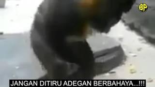 Monkey Handjob