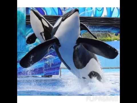 Cetaceans are angels