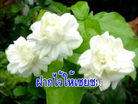 วีซีดีคาราโอเกะ ดอกไม้ไทย
