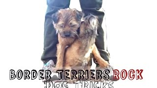 Border Terriers Rock Dog Tricks!