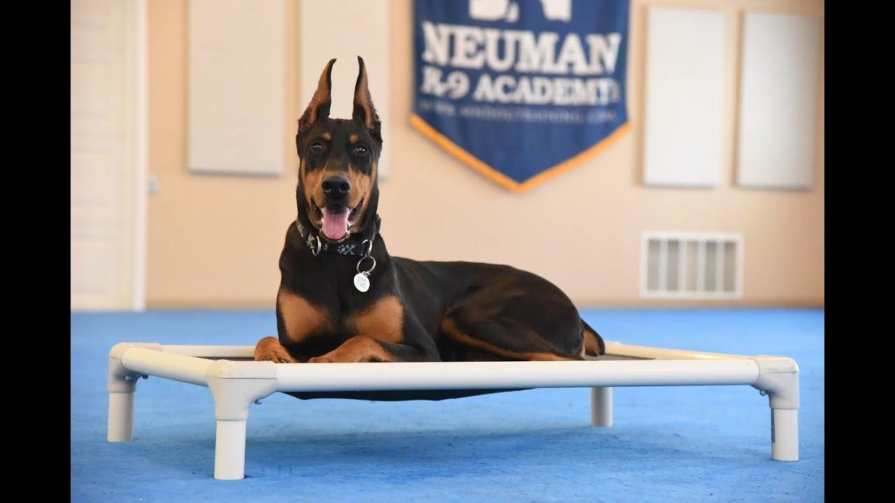 Lucky Doberman Pinscher Boot Camp Dog Training Video