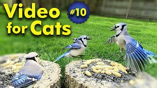 TV for Cats   Backyard Bird and Squirrel Watching   Video 10