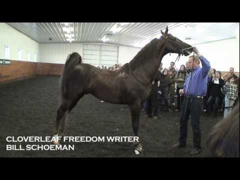 Cloverleaf Freedom Writer ~ 2013 All American Cup Stallion Tour