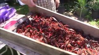 Old Friends Boil Crawfish On The Bayou