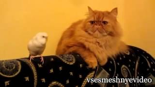 Смешные приколы с кошками