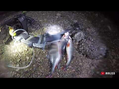 Zemūdens medības Daugava 23.08.2017
