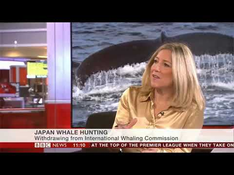 Japan Resumes Whale Hunting BBC News