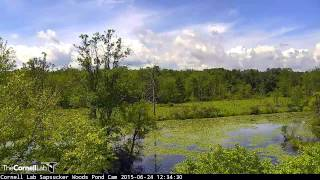 Sapsucker Woods Pond Cam Time Lapse Clouds
