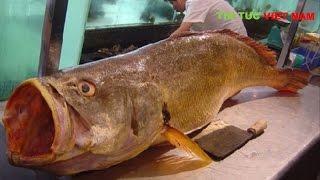 Chuyện lạ Đại gia việt chi tiền tỷ mua con Cá Vàng Bí Ẩn ở Thái Bình