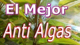 El mejor anti Algas