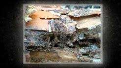 Termite Treatments Haslet TX 76052 Termite Control