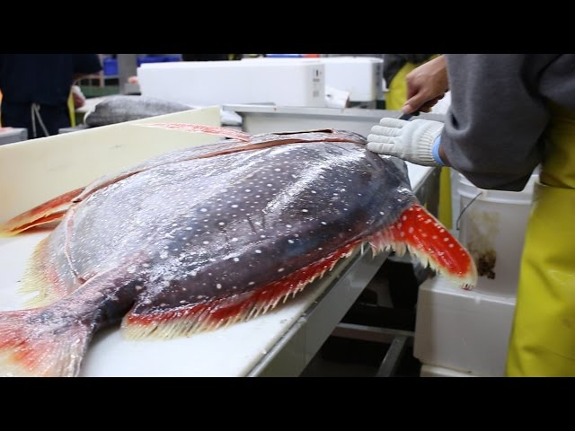 Fish Filleting- Opah