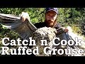 Catch n Cook GROUSE!!! | ANY BEARS AROUND?!? | WILD High Bush Cranberry Sauce, Oyster Mushrooms