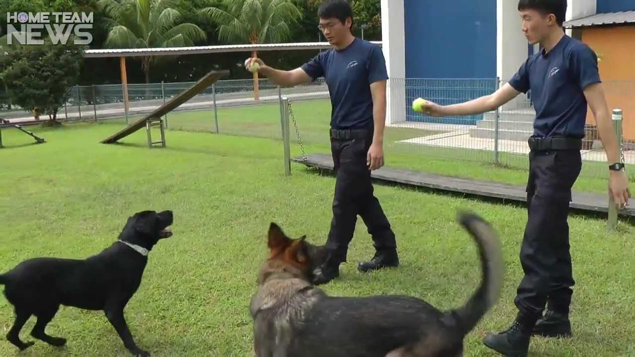 Adopt A Police Dog Free
