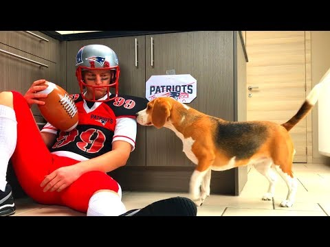 Cute Dog Vs Super Bowl Patriots Tryout : Funny Beagle Marie
