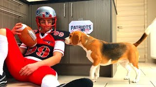 Dogs Vs American Football Player : Funny Beagle Dogs Louie & Marie