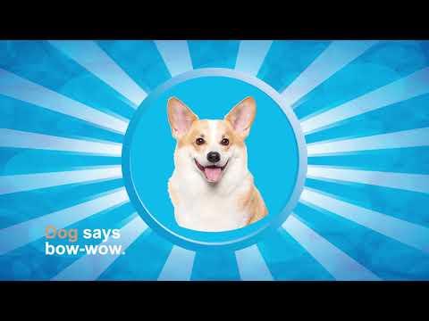 Ira Explainer Video   Letter D   Dog