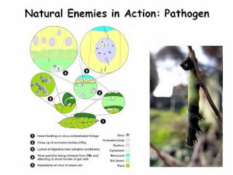 Biological Pest Control in Organic Tree Crops
