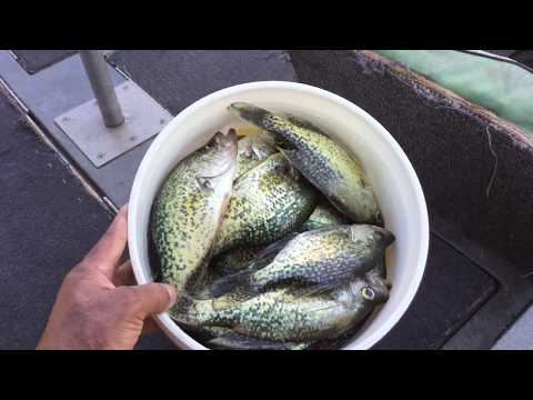Delta Fishing With The Crappie King