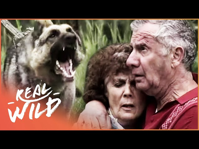 Police Dog Tracks Down Thieves Who Rob An Elderly Couple | Pet Heroes EP13 | Real Wild