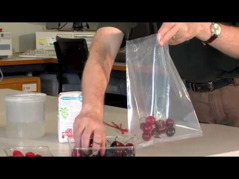 SWD: Floatation sugar test for spotted wing drosophila