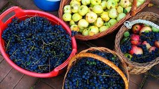 Чача-мультифрукт ( виноград+яблоко ).