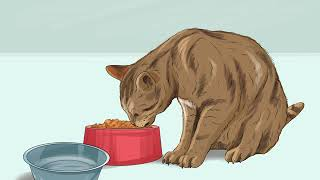 How to Get Your Cat to Like You